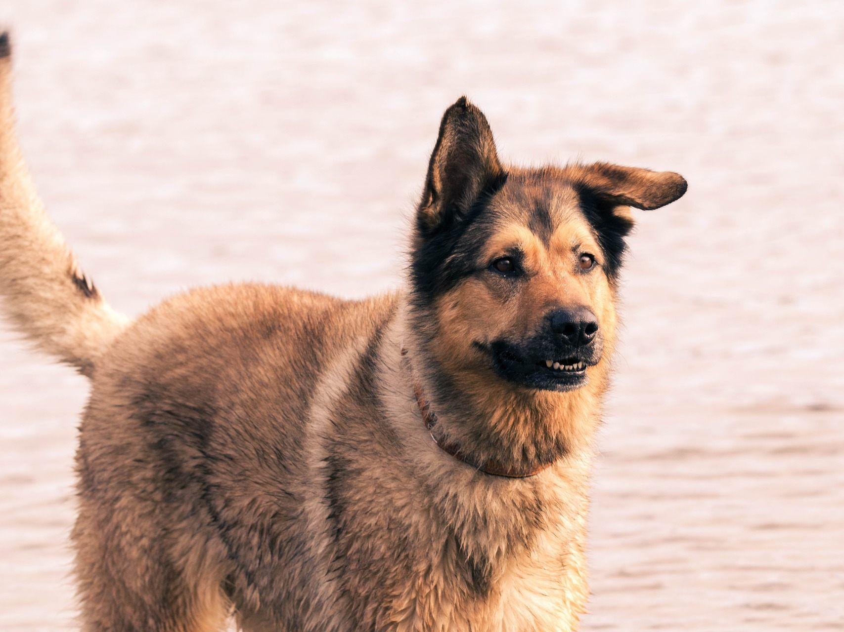 Anmeldung Hund Wien