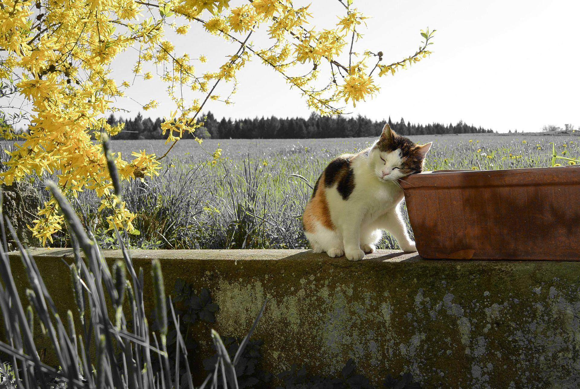 Wetter am Wochenende: Frühlingsbeginn bringt viel Sonnenschein