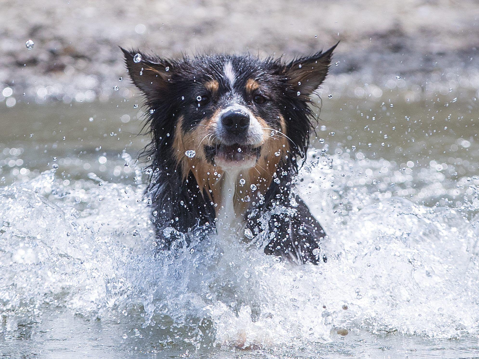 Bildergebnis für hundstage 2019