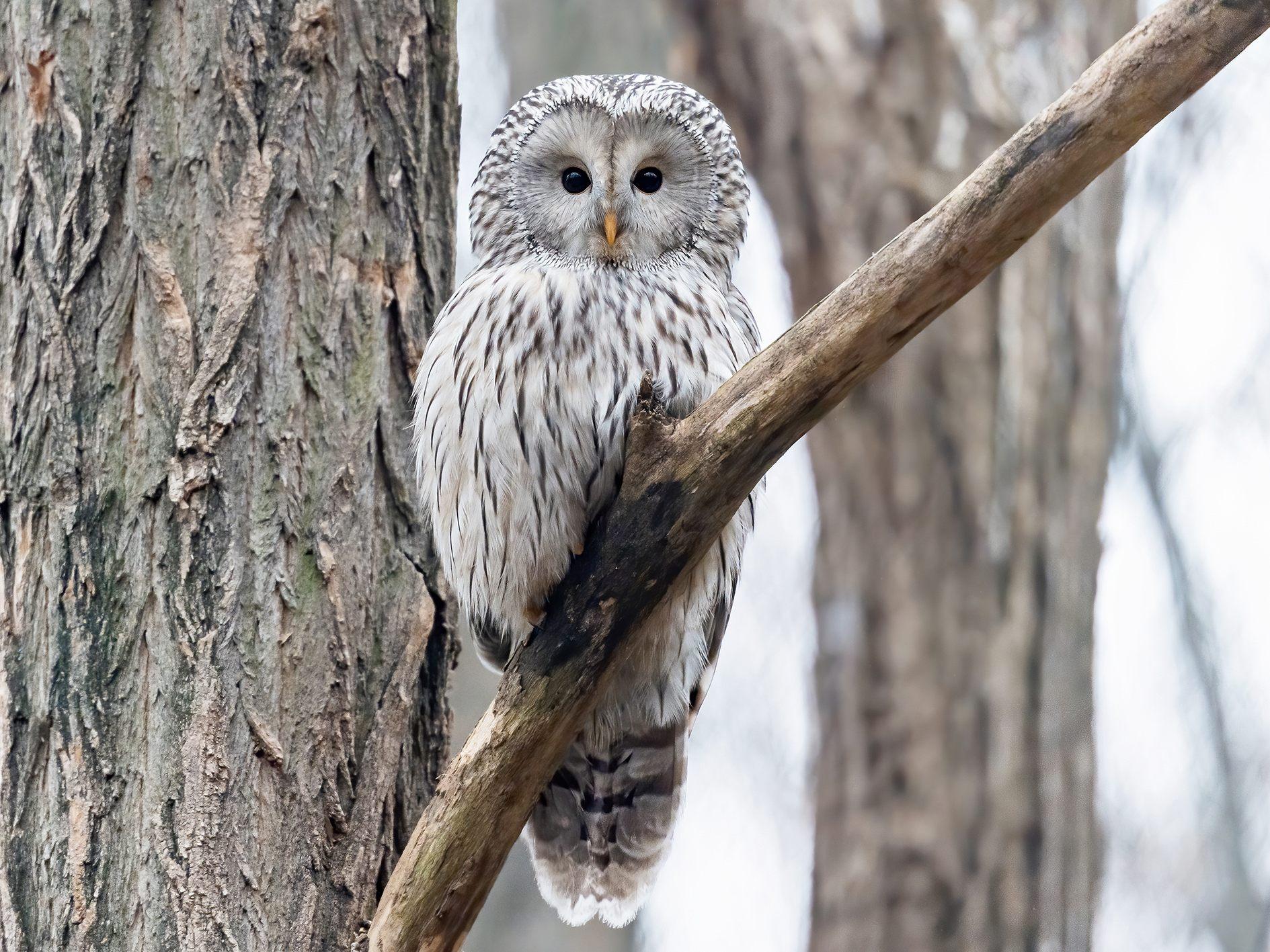 Owl erotik OWL Ladies