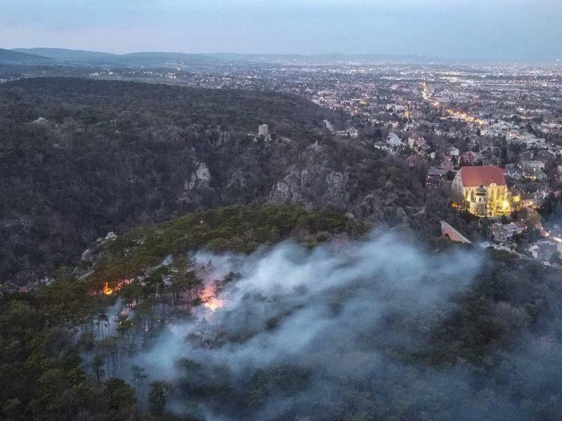 Waldbrand in der Nähe von Mödling: Zeugen gesucht